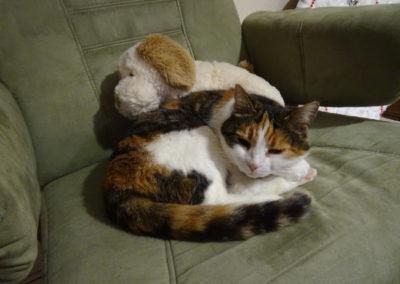 3 chats vivent à la résidence